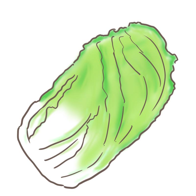 白菜のイラスト(斜め)