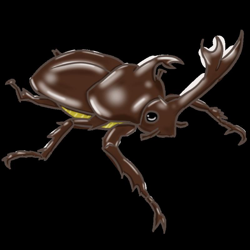 茶色いカブトムシ 2015-6-6