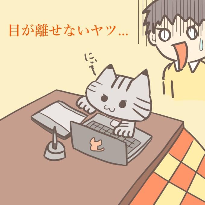 パソコンに悪戯する猫