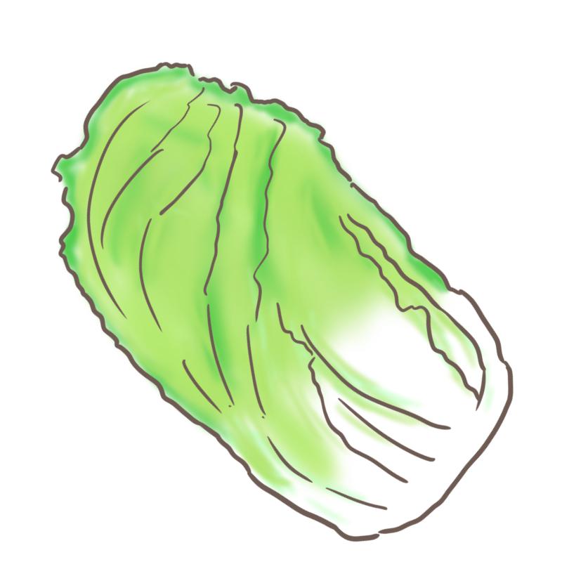 白菜のイラスト(斜め反転)