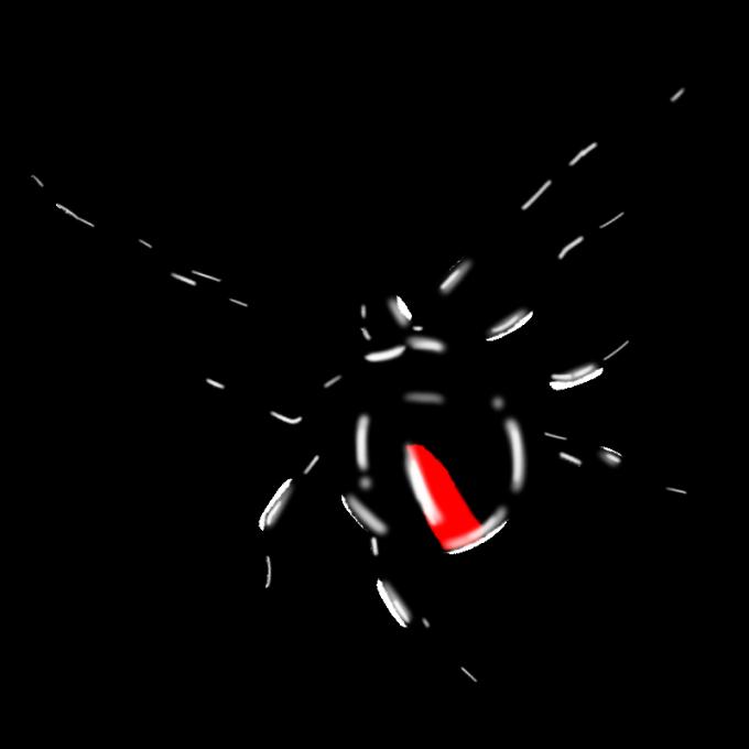 セアカゴケグモ 3
