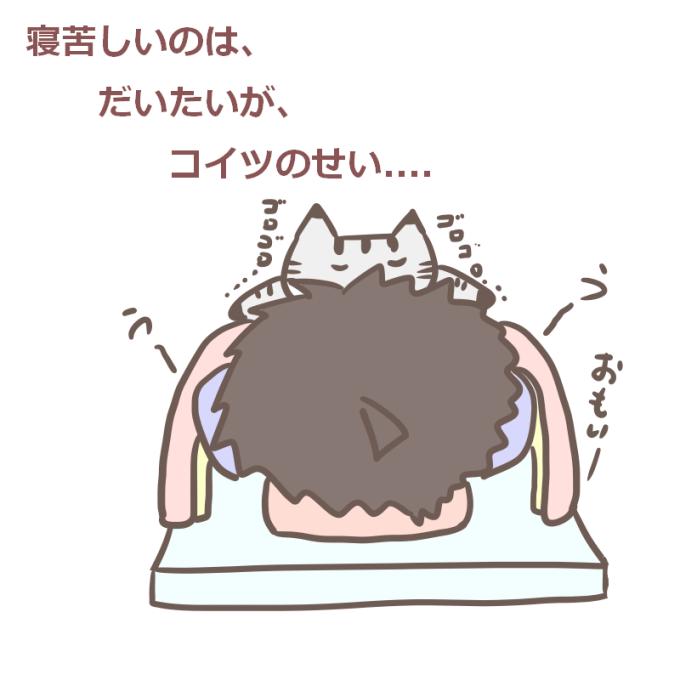 寝苦しいのはだいたいがコイツのせい(猫)