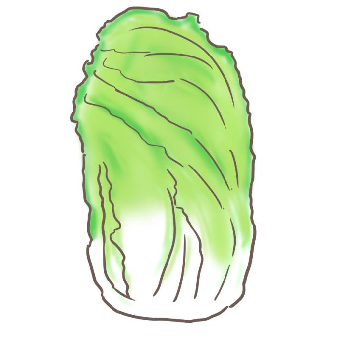 白菜のイラスト(縦)