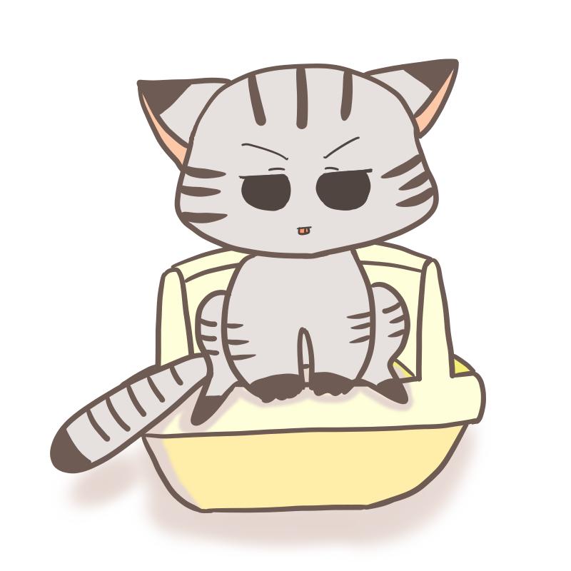 真剣にトイレをする猫(舌出し)