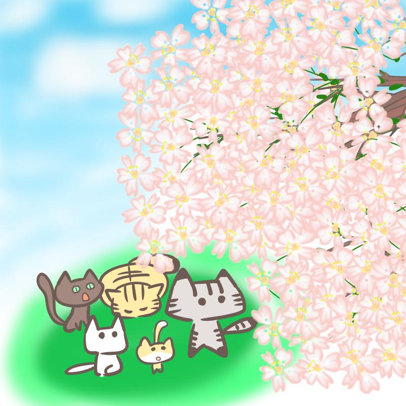 猫のお花見